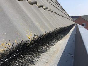 Vogels onder de dakpannen weren